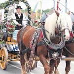 Ein prächtiger Anblick: das Naabecker-Braueigespann im Festzug vom Rathaus zum Festzelt.